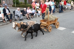 Oogstdankfeest-Berg-aan-de-Maas-2009-011