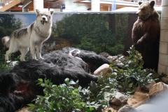 033-Wolf-en-beer-met-gedode-koe
