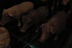 Maaseik-Tentoonstelling-Terracotta-Leger-32-Dieren