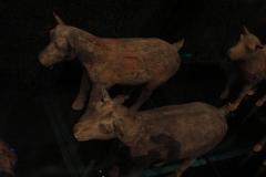Maaseik-Tentoonstelling-Terracotta-Leger-36-Dieren